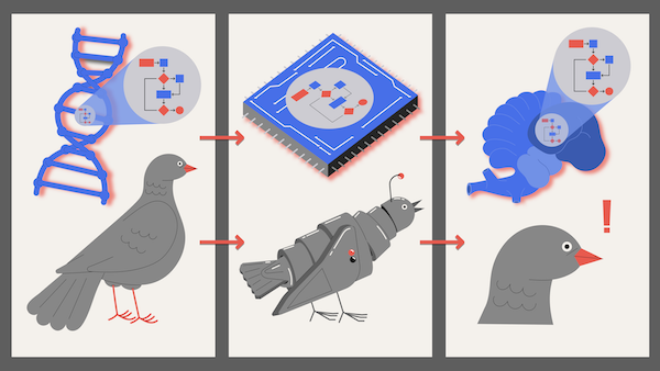 The algorithm for flying low moves from bird DNA to robot memory to bird brain. Or does the algorithm stay put while the things around it change?
